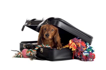 Vacaciones con o sin mascota, esa es la cuestión.